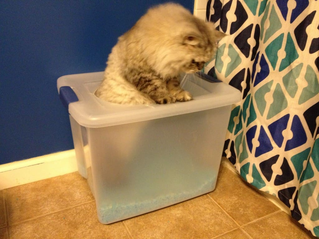 Best ideas about DIY Kitty Litter . Save or Pin diy top entry litter box Archives Charleston Crafted Now.