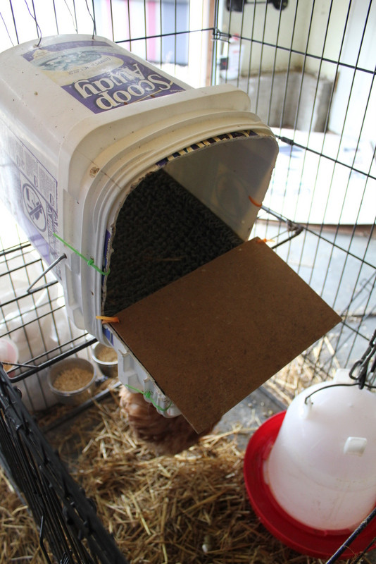 Best ideas about DIY Nest Box . Save or Pin DIY roll away nest box My Pet Chicken Blog Now.