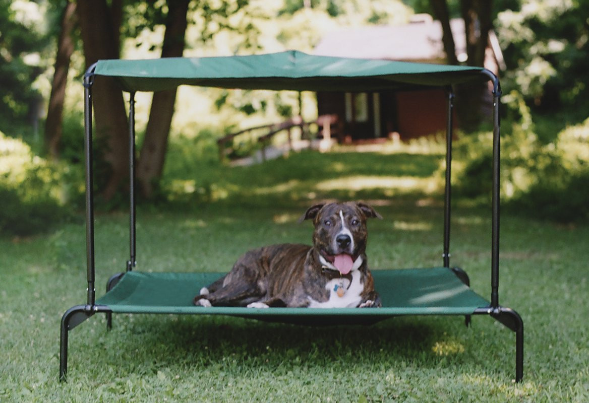 Best ideas about DIY Outdoor Dog Bed . Save or Pin Kittywalk Systems Puppywalk Indoor Outdoor Ultra Breezy Now.