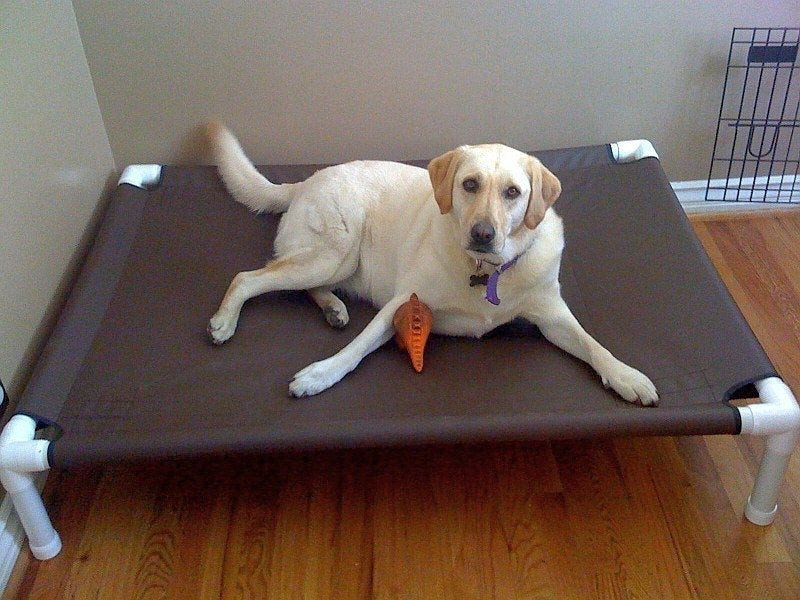Best ideas about DIY Outdoor Dog Bed . Save or Pin Dog Bed Raised Dog Bed Medium Bed Dog Bed Cot Now.