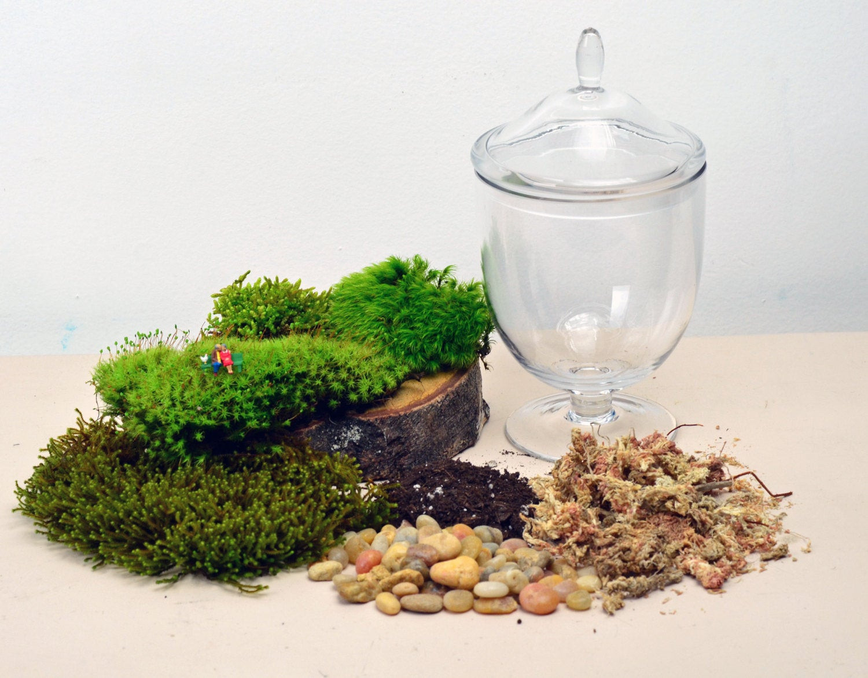 Best ideas about DIY Terrarium Kits . Save or Pin DIY Terrarium kit Live Moss Little People by Now.