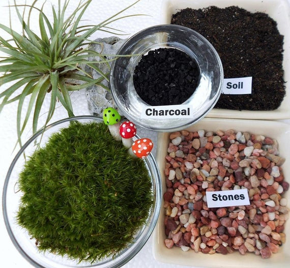 Best ideas about DIY Terrarium Kits . Save or Pin DIY Moss Terrarium Kit Lucious Green Moss Medium Size Now.