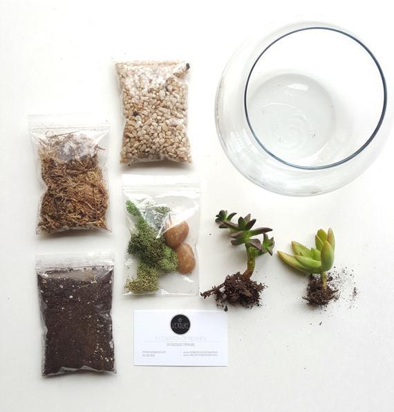 Best ideas about DIY Terrarium Kits . Save or Pin DIY Terrarium Kit Succulent Terrarium Glass by ShopVerdure Now.