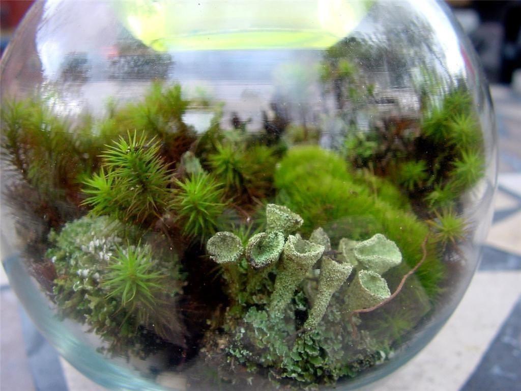 Best ideas about DIY Terrarium Kits . Save or Pin Terrarium kit DIY Moss & lichen kit FEATURED in 2015 Now.