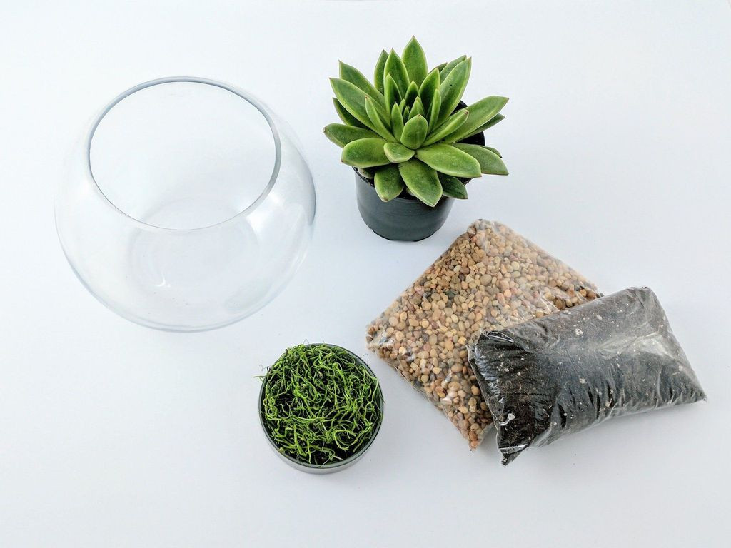 Best ideas about DIY Terrarium Kits . Save or Pin DIY Succulent Terrarium Kit Fishbowl – Succuterra Now.