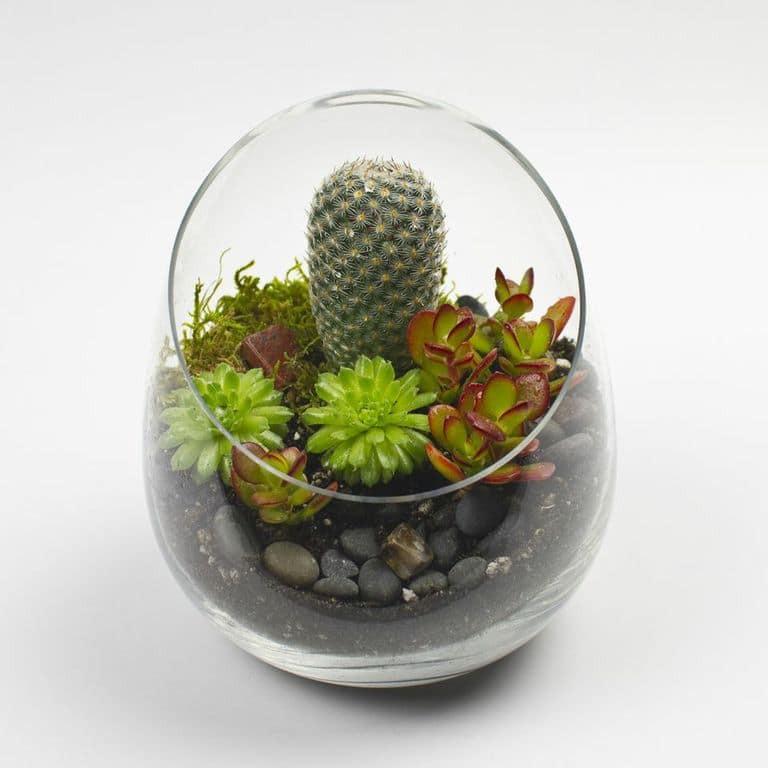Best ideas about DIY Terrarium Kits . Save or Pin The Sideways DIY Succulent Terrarium Kit Now.