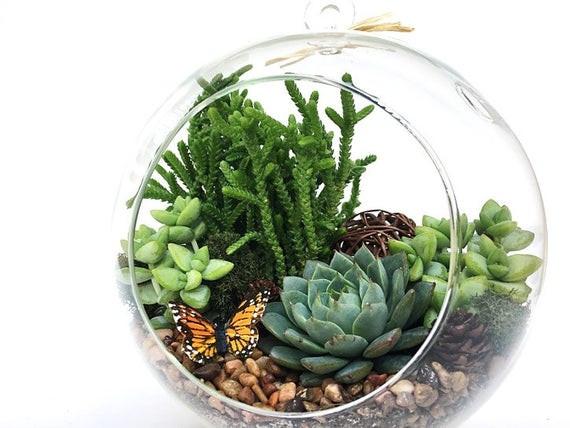 Best ideas about DIY Terrarium Kits . Save or Pin Succulent Terrarium DIY Kit Woodsy6 inch Now.