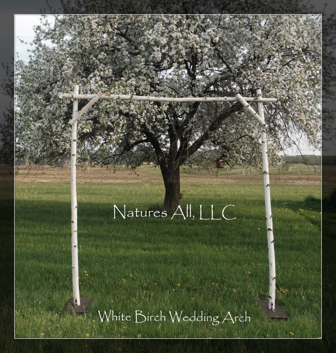 Best ideas about DIY Wedding Arch Frame . Save or Pin White Birch Wedding Arch White Birch Arbor plete Kit For Now.