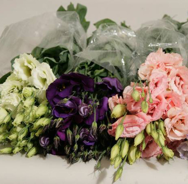 Best ideas about DIY Wedding Flowers Wholesale . Save or Pin Wholesale Wedding Flowers – Bulk DIY Wedding Flowers at Now.