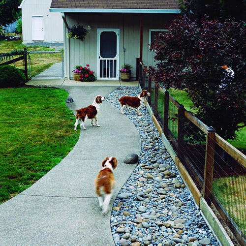Best ideas about Dog Friendly Backyard . Save or Pin 8 Dog Friendly Backyard Ideas Now.