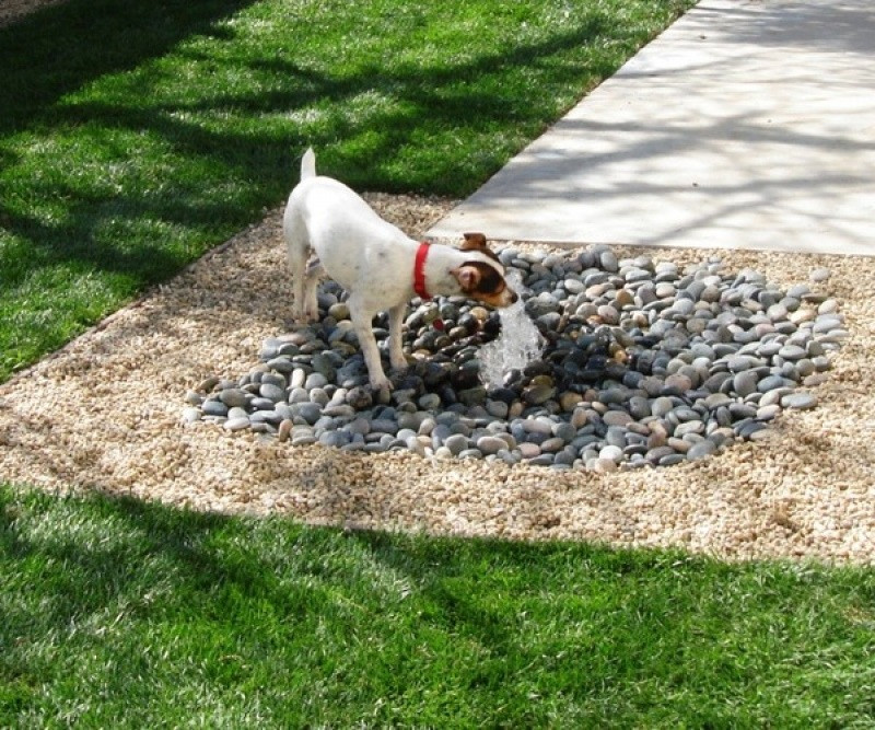 Best ideas about Dog Friendly Backyard . Save or Pin 8 Great Backyard Ideas to Delight Your Dog Now.