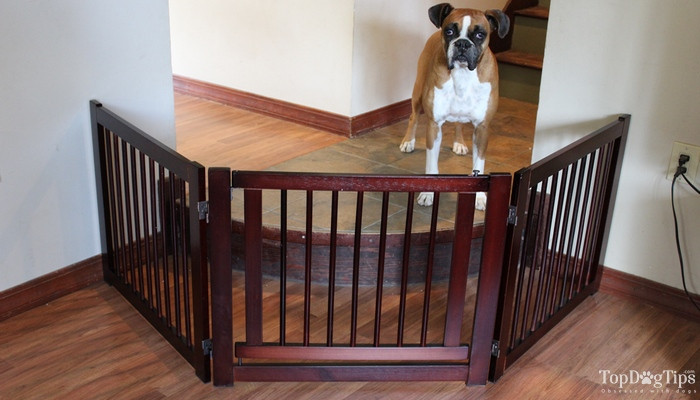 Best ideas about Dog Gate For Stairs . Save or Pin Best Dog Gates for Stairs & Indoors We ve pared Top Now.