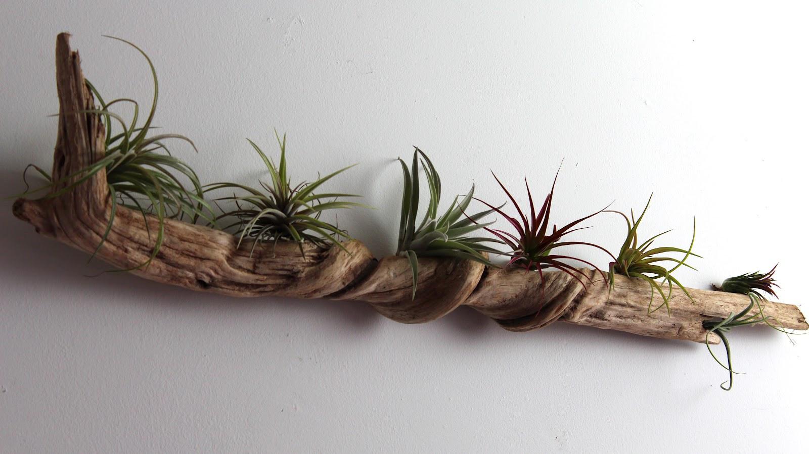 Best ideas about Driftwood Art DIY . Save or Pin Nest DIY Driftwood Wall Garden Now.