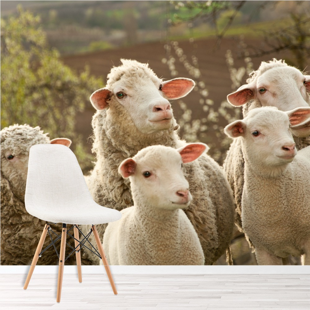 Best ideas about Farm Animal Kitchen Decor . Save or Pin Sheep & Lambs Wall Mural Funny Farm Animals Now.