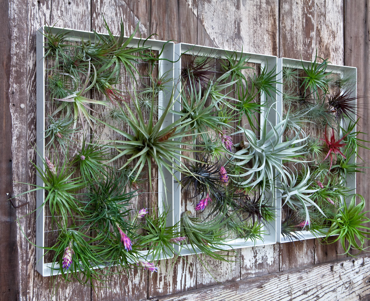 Best ideas about Garden Wall Artwork . Save or Pin Living Wall Art Vertical Garden Frames by Airplantman Now.