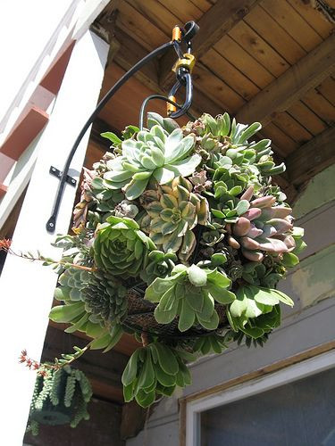 Best ideas about Hanging Succulent Planter . Save or Pin 17 Best images about succulent balls on Pinterest Now.