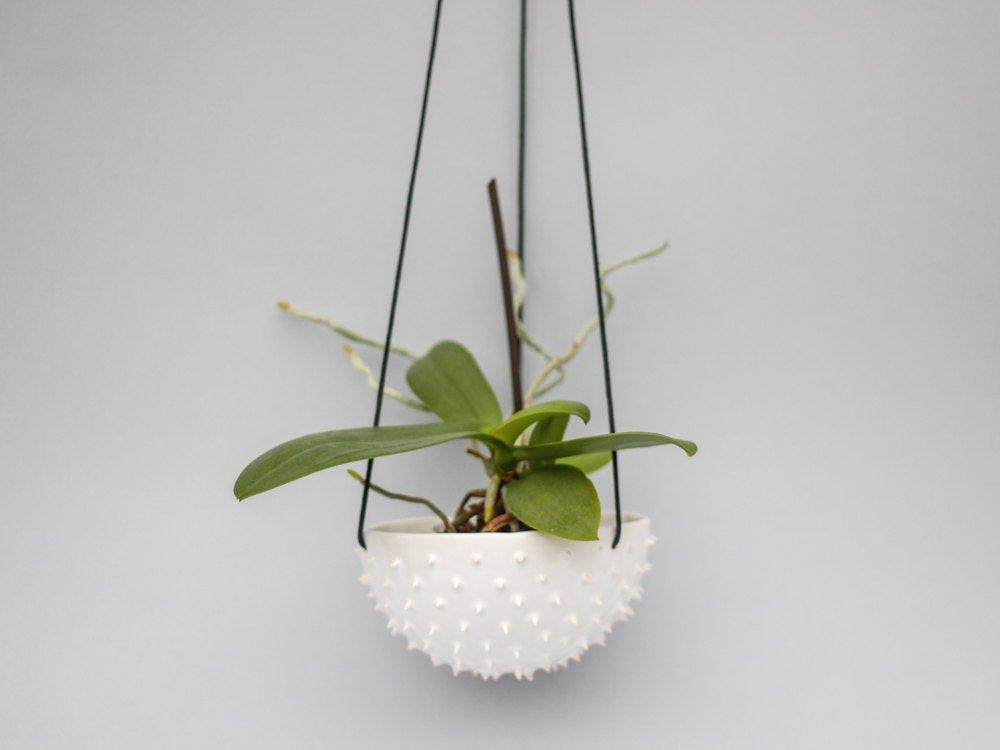 Best ideas about Hanging Succulent Planter . Save or Pin Ceramic spiky white hanging planter air planter succulent Now.