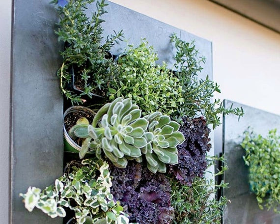 Best ideas about Hanging Succulent Planter . Save or Pin Planter succulent planter wall planter Hanging planter air Now.