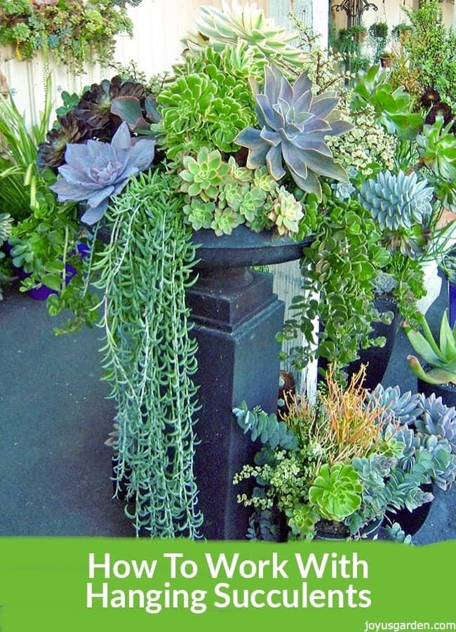 Best ideas about Hanging Succulent Planter . Save or Pin How To Work With Hanging Succulents Without All The Leaves Now.