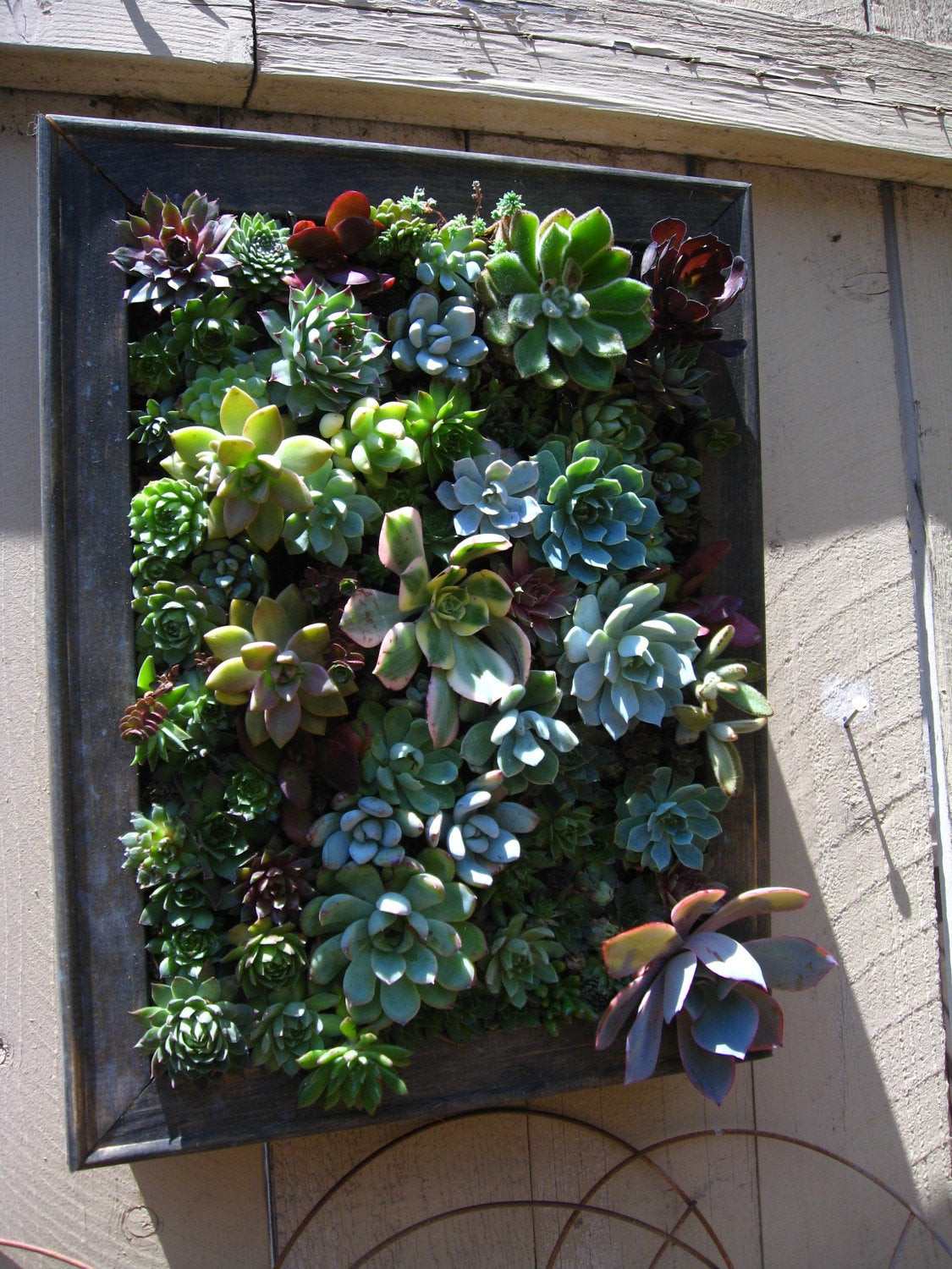 Best ideas about Hanging Succulent Planter . Save or Pin Rustic Hanging Vertical Planter with Succulent Arrangement Now.