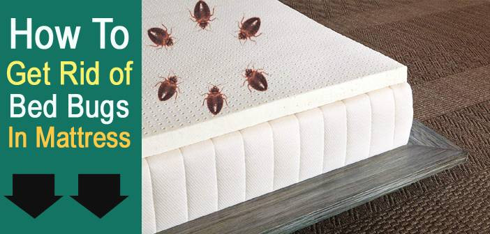 Best ideas about How To Get Rid Of Bed Bugs DIY . Save or Pin Best Mattresses Reviews 2017 Ultimate Buying Guide Now.
