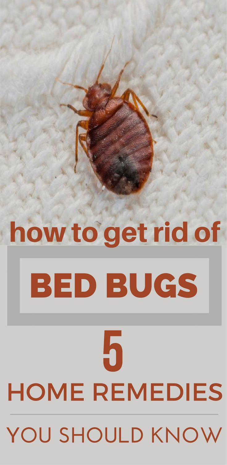Best ideas about How To Get Rid Of Bed Bugs DIY . Save or Pin How To Get Rid Bed Bugs – 5 Home Reme s You Should Now.