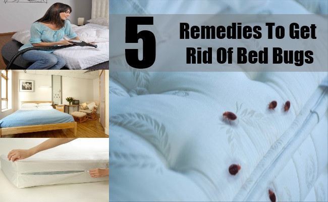 Best ideas about How To Get Rid Of Bed Bugs DIY . Save or Pin 5 Best Reme s To Get Rid Bed Bugs Easy Ways To Get Now.