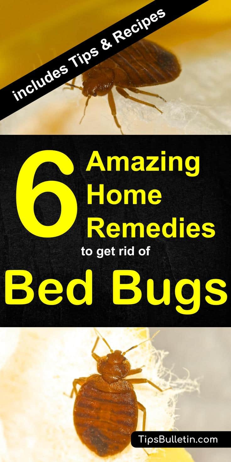 Best ideas about How To Get Rid Of Bed Bugs DIY . Save or Pin 6 Home Reme s to Get Rid of Bed Bugs [Incl Recipes] Now.