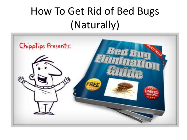 Best ideas about How To Get Rid Of Bed Bugs DIY . Save or Pin How to Get Rid of Bed Bugs Naturally Now.