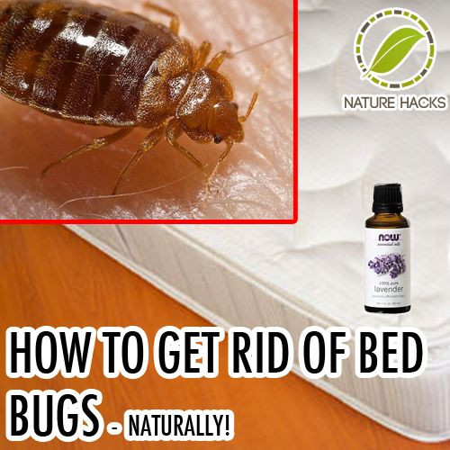 Best ideas about How To Get Rid Of Bed Bugs DIY . Save or Pin how to rid of bed bugs Non permeable mattress and Now.