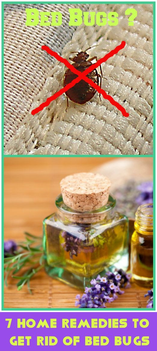 Best ideas about How To Get Rid Of Bed Bugs DIY . Save or Pin 1000 ideas about Bed Bug Reme s on Pinterest Now.
