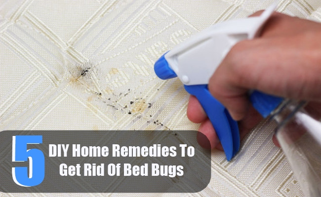 Best ideas about How To Get Rid Of Bed Bugs DIY . Save or Pin 5 DIY Home Reme s To Get Rid Bed Bugs Now.