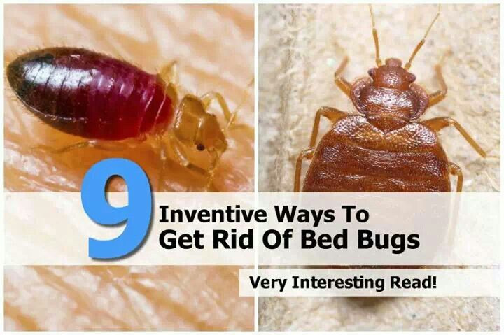 Best ideas about How To Get Rid Of Bed Bugs DIY . Save or Pin Get rid of bed bugs eww Do it yourself Now.