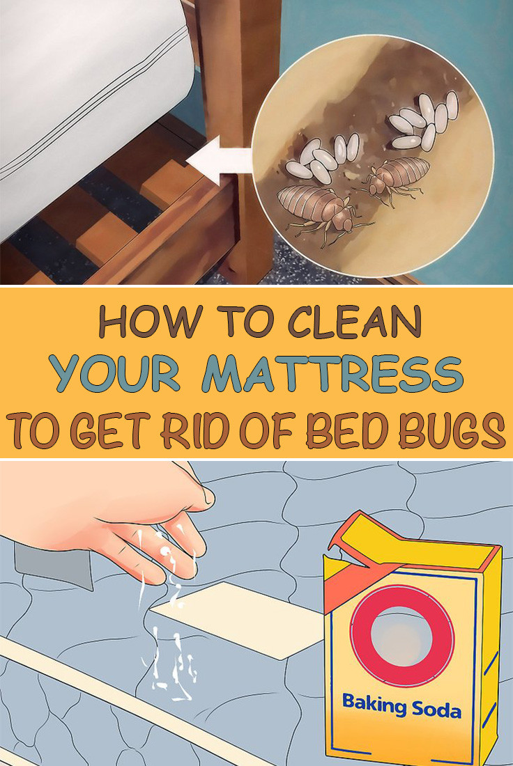 Best ideas about How To Get Rid Of Bed Bugs DIY . Save or Pin How To Clean Your Mattress To Get Rid Bed Bugs Simple Now.
