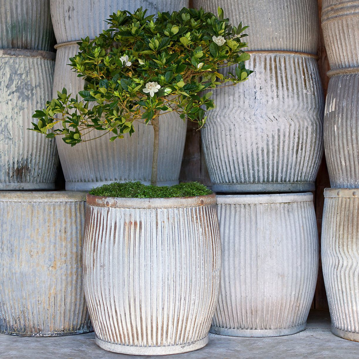 Best ideas about Large Outdoor Planters . Save or Pin Vintage Zinc Barrel Now.