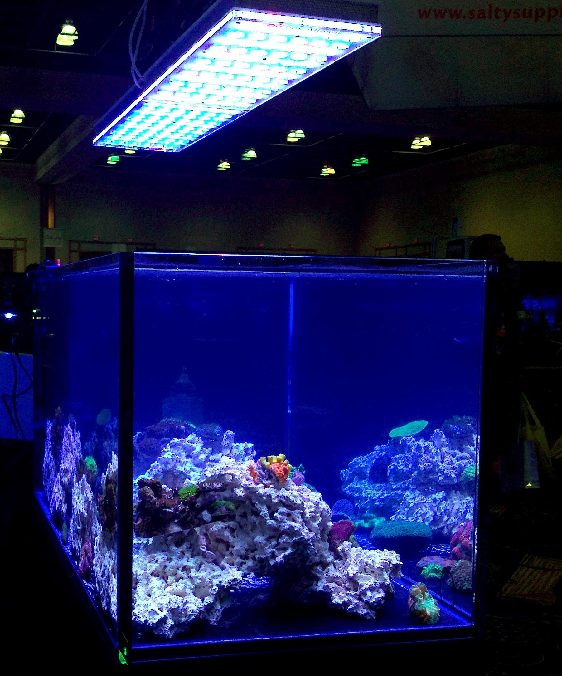 Best ideas about Led Aquarium Lights . Save or Pin IN DEPTH UNDERSTANDING OF ORPHEK ATLANTIK V2 Now.