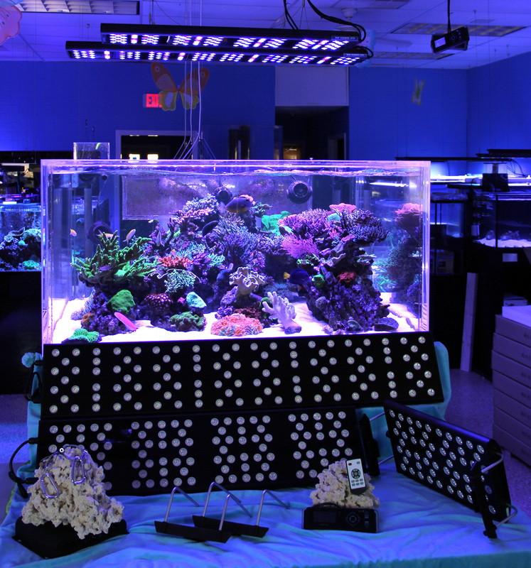 Best ideas about Led Aquarium Lights . Save or Pin SeaLife LED Aquarium Lighting Review Reefs Now.