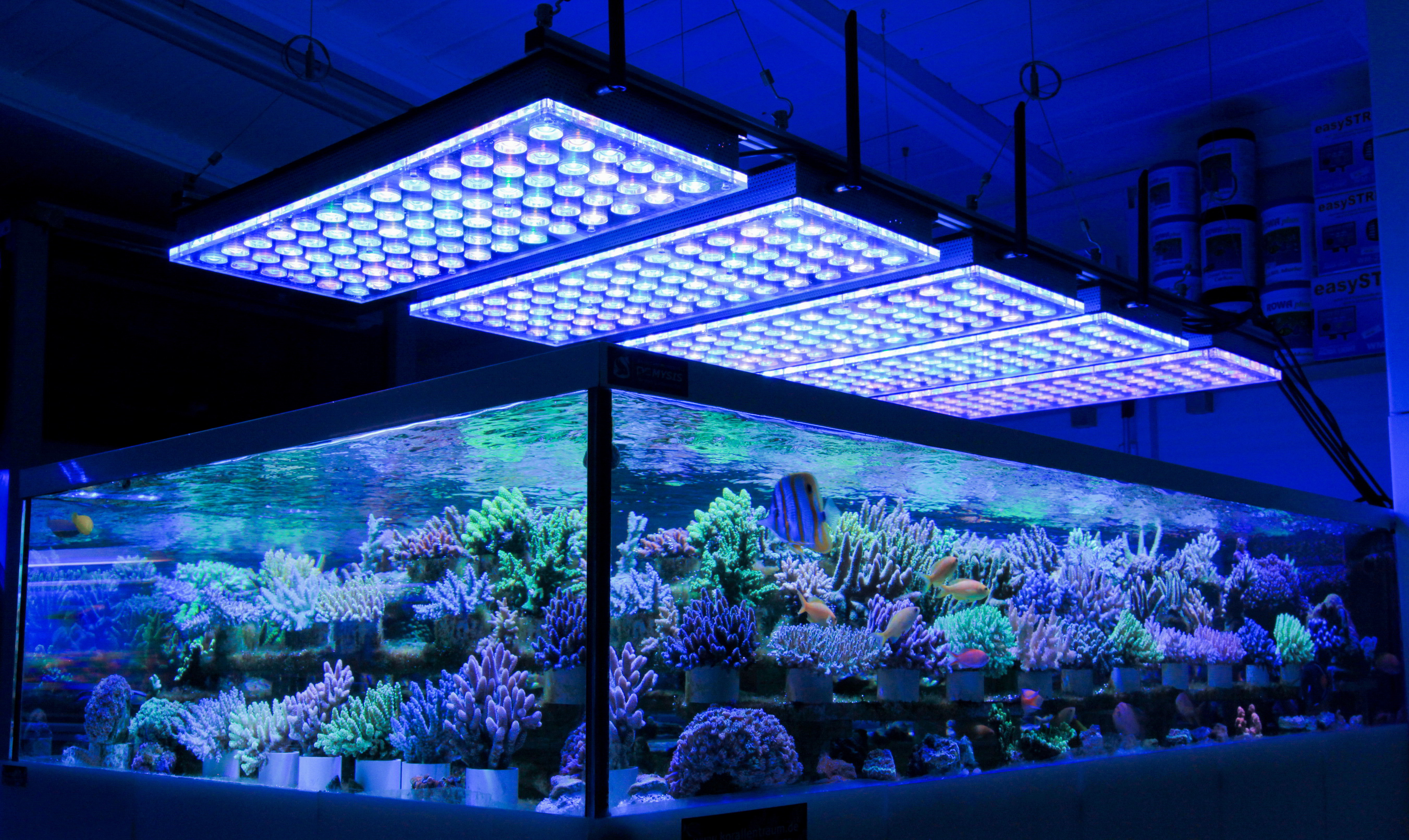 Best ideas about Led Aquarium Lights . Save or Pin German Store Displays Beautiful Coral Atlantik V4 LED Now.