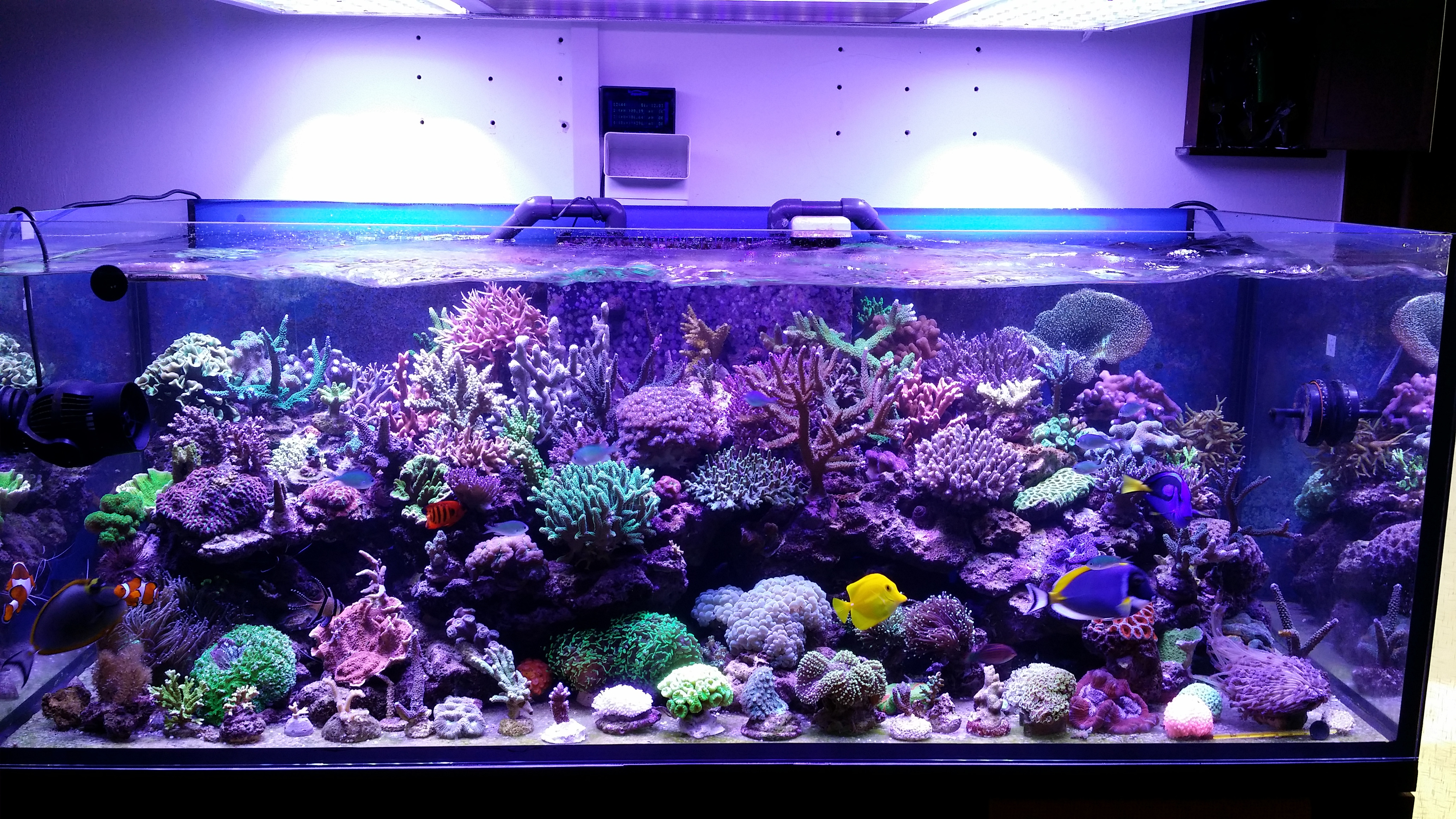 Best ideas about Led Aquarium Lights . Save or Pin This tank is truly one beautiful •Aquarium LED Lighting•Orphek Now.