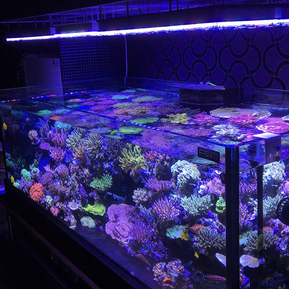 Best ideas about Led Aquarium Lights . Save or Pin Orphek Atlantik V3 PLUS Reef Aquarium LED Lighting WiFi Now.