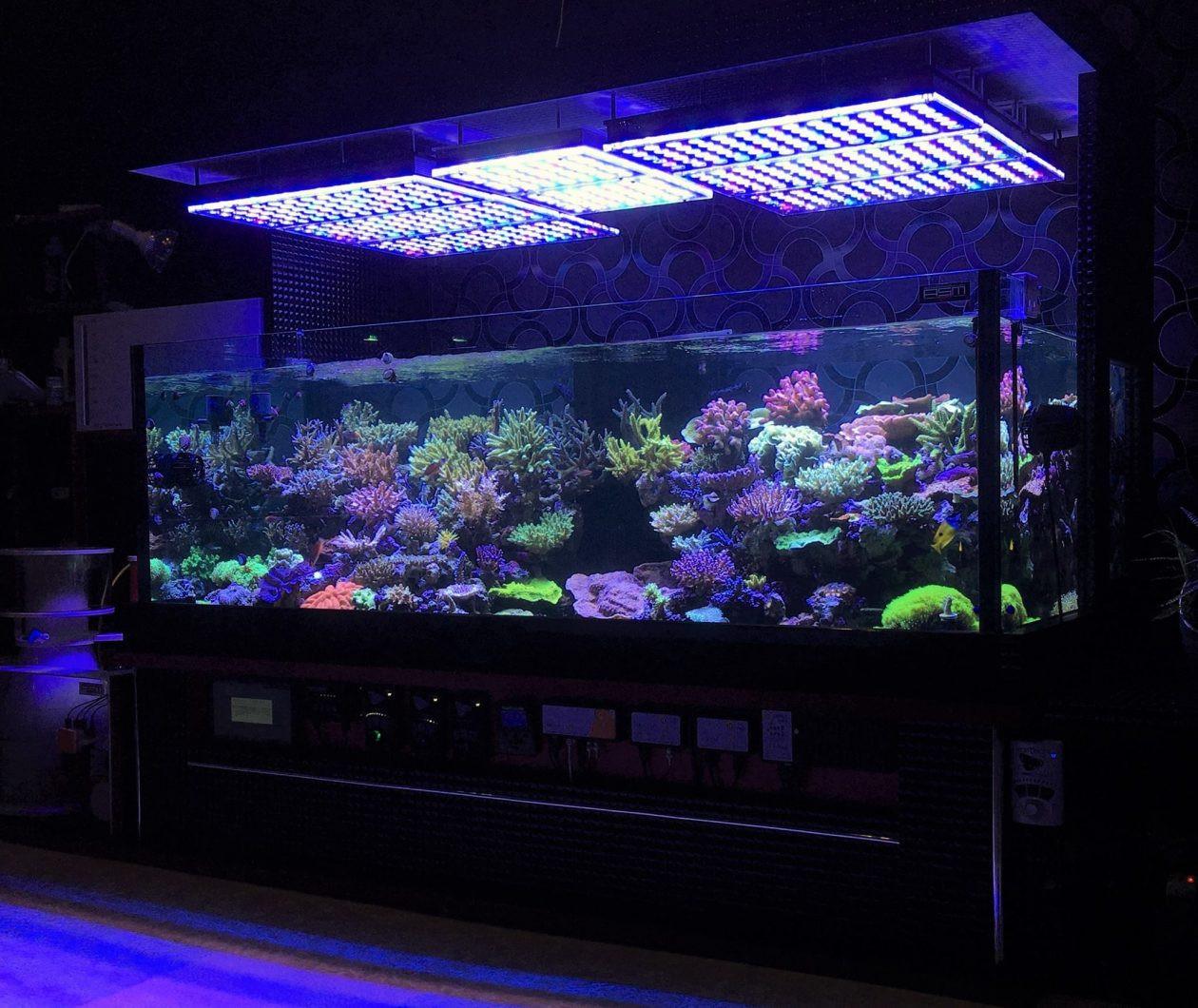 Best ideas about Led Aquarium Lights . Save or Pin Orphek Atlantik pact V3 Plus Internet of Things Now.