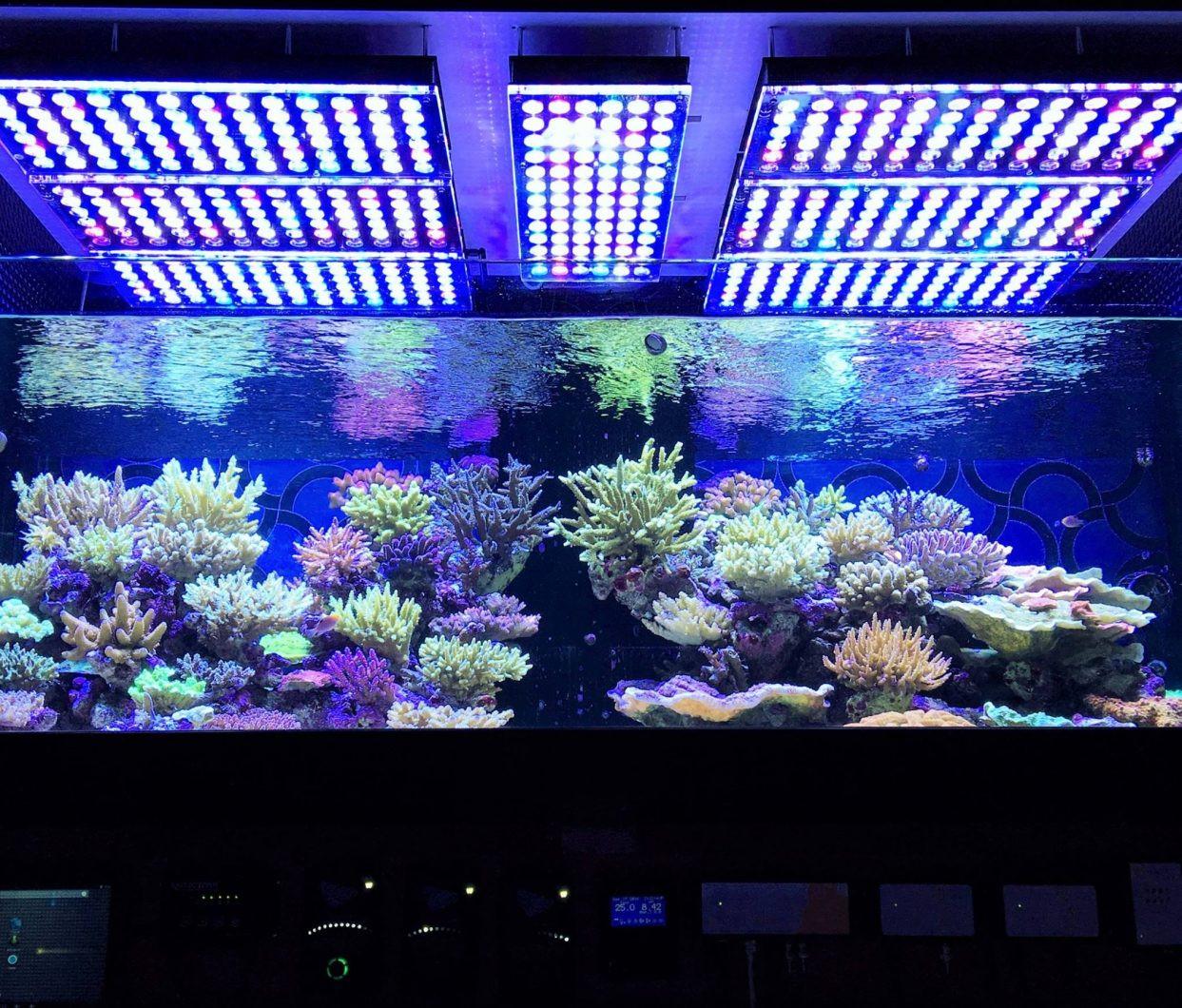 Best ideas about Led Aquarium Lights . Save or Pin Aquarium LED Lighting • Orphek Now.