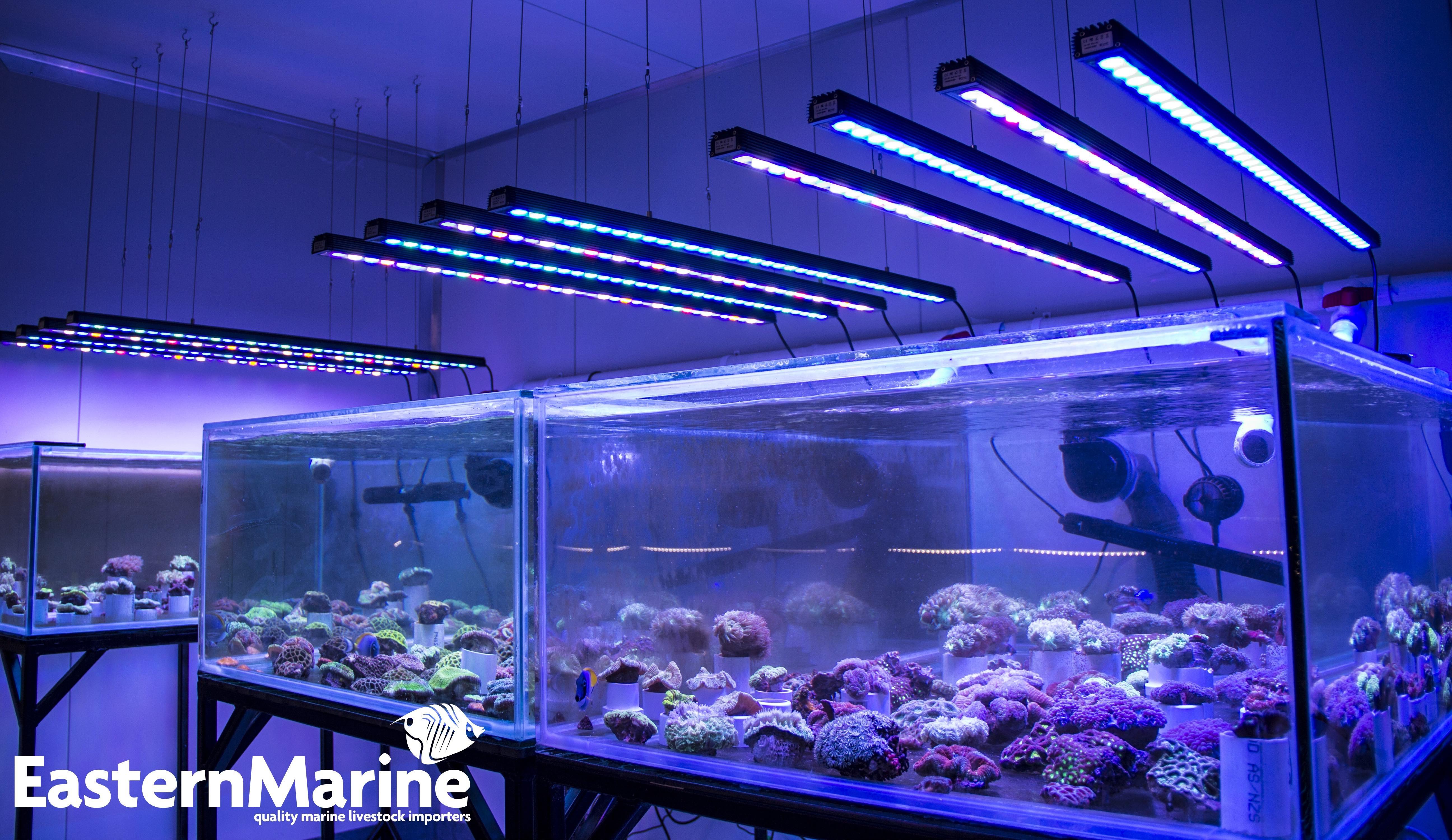 Best ideas about Led Aquarium Lights . Save or Pin OR 120 90 60 BAR LED Lighting • Orphek Aquarium LED Lighting Now.
