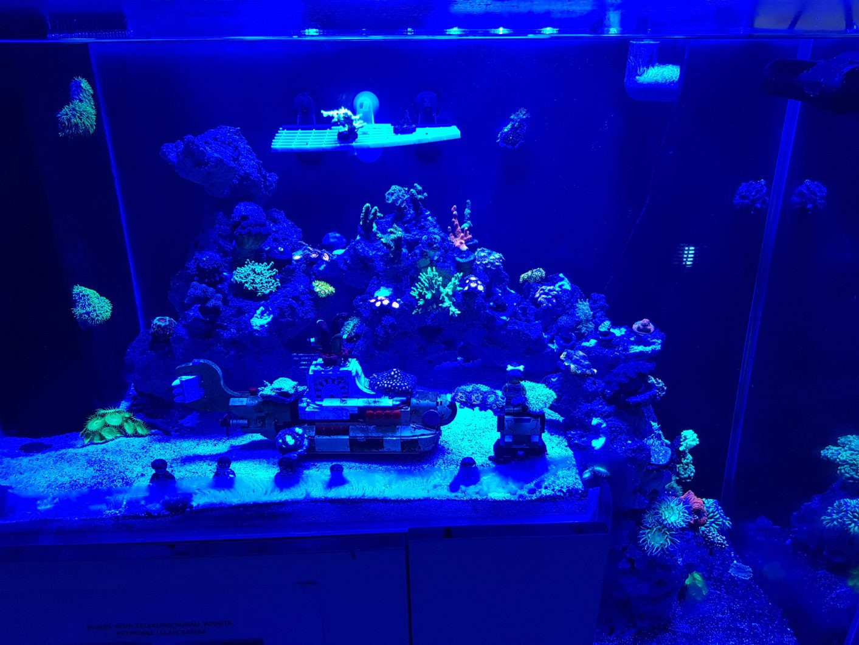 Best ideas about Led Aquarium Lights . Save or Pin Reef Aquarium From Malaysia Under Orphek LED Aquarium Now.