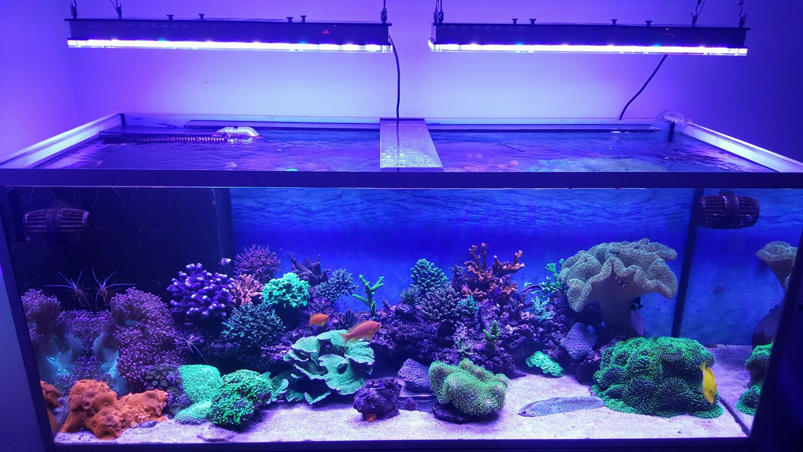 Best ideas about Led Aquarium Lights . Save or Pin What Aquarium LED lights do I chose for my aquarium •Orphek Now.
