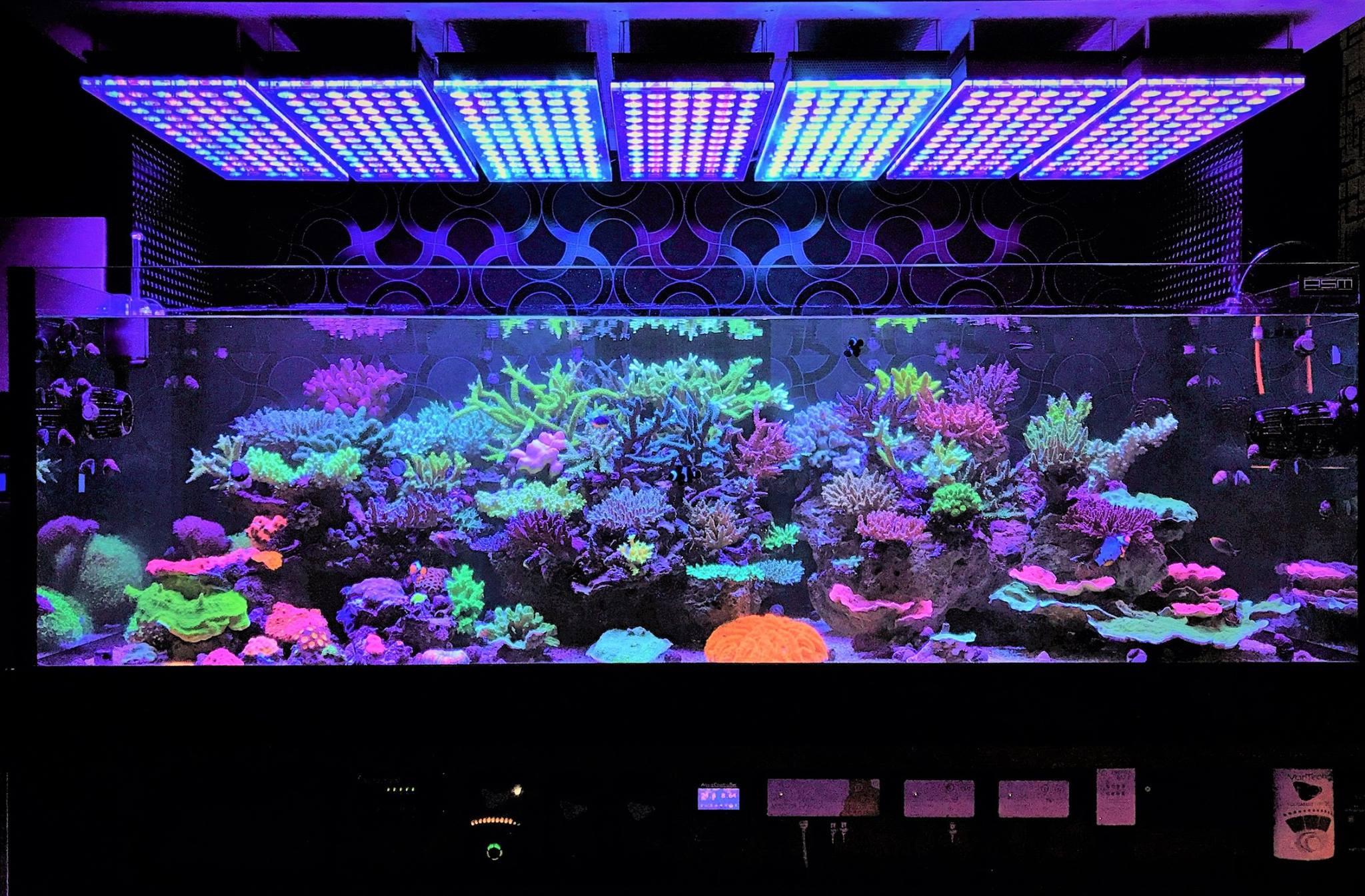 Best ideas about Led Aquarium Lights . Save or Pin Aquarium LED Lighting s best Reef Aquarium LED Now.