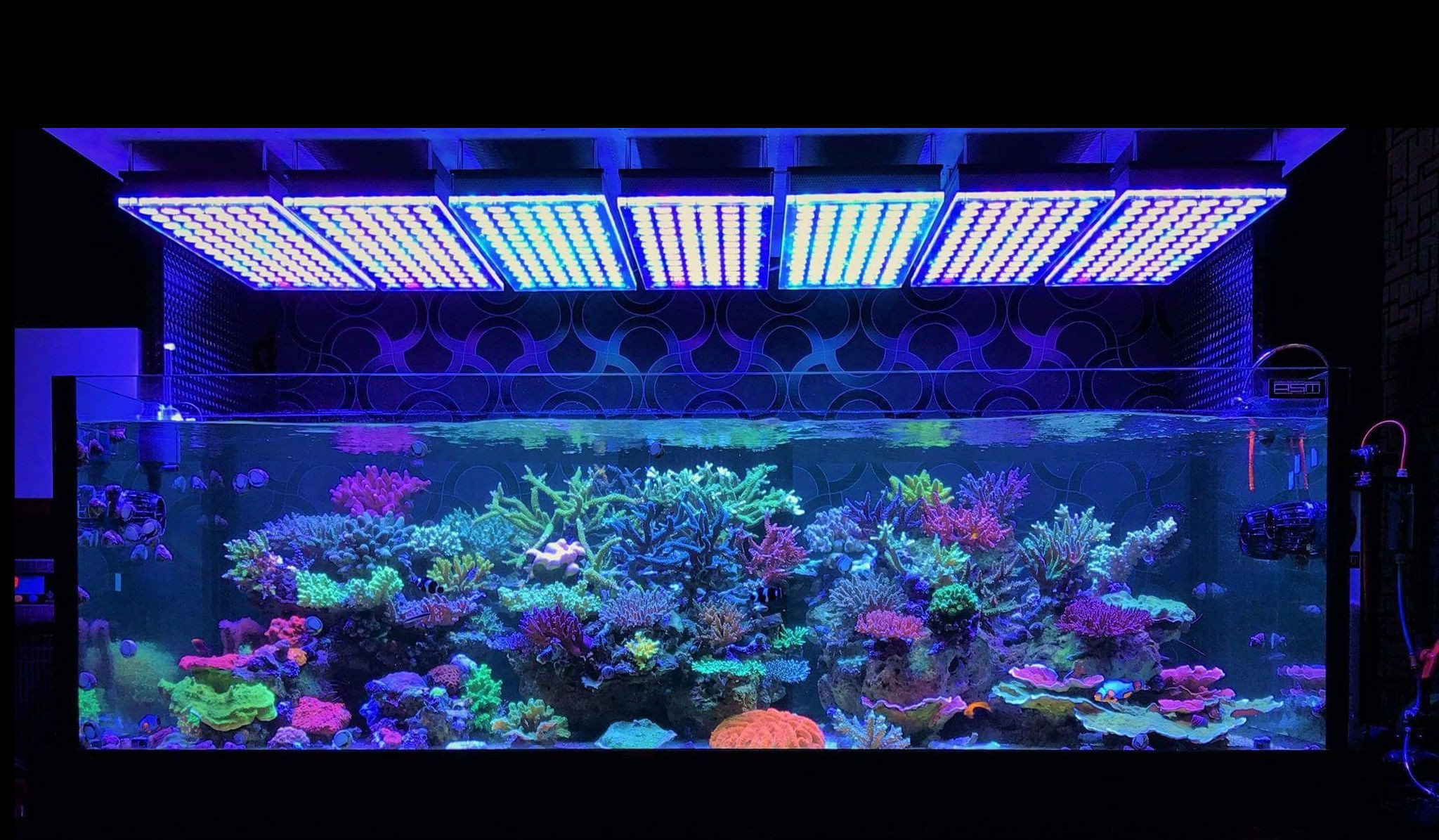 Best ideas about Led Aquarium Lights . Save or Pin Atlantik V4 Reef Aquarium LED lighting • Orphek Aquarium Now.
