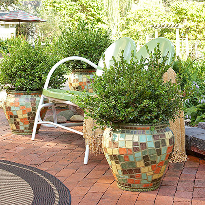 Best ideas about Lowes Outdoor Planters . Save or Pin Potted Trees for a Beautiful Porch Now.