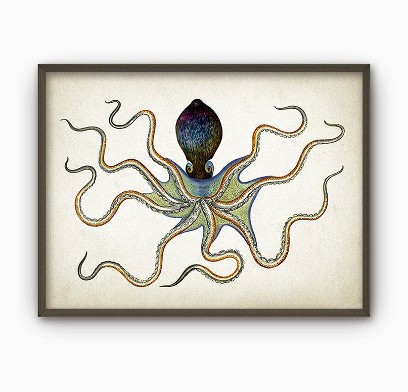 Best ideas about Octopus Wall Art . Save or Pin Octopus Vintage Marine Wall Art Poster Marine Home Decor Now.