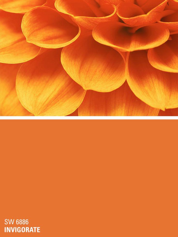 Best ideas about Orange Paint Colors . Save or Pin 25 Best Ideas about Orange Paint Colors on Pinterest Now.